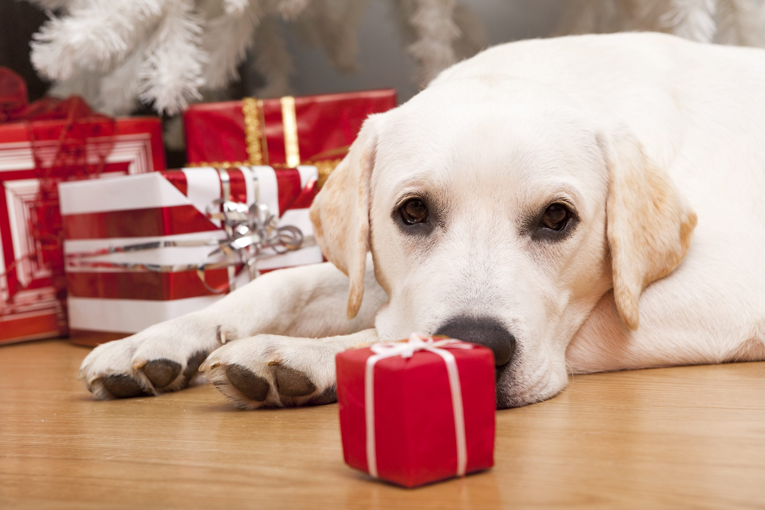 A Holiday Gift Guide For Your Pets