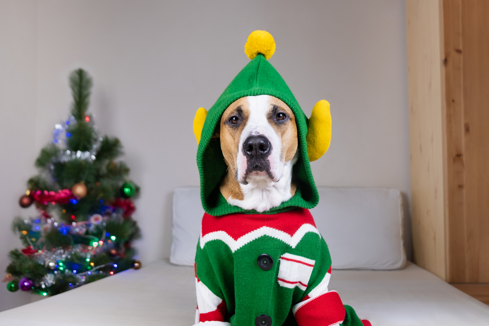Parent/Pup Ugly Christmas Sweater SignUp Form