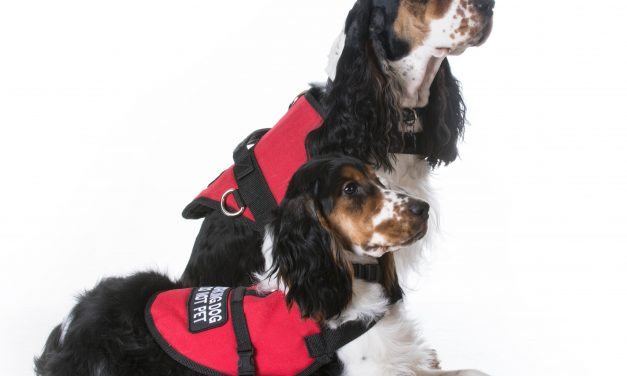 Service, Therapy, & Emotional Support Dogs