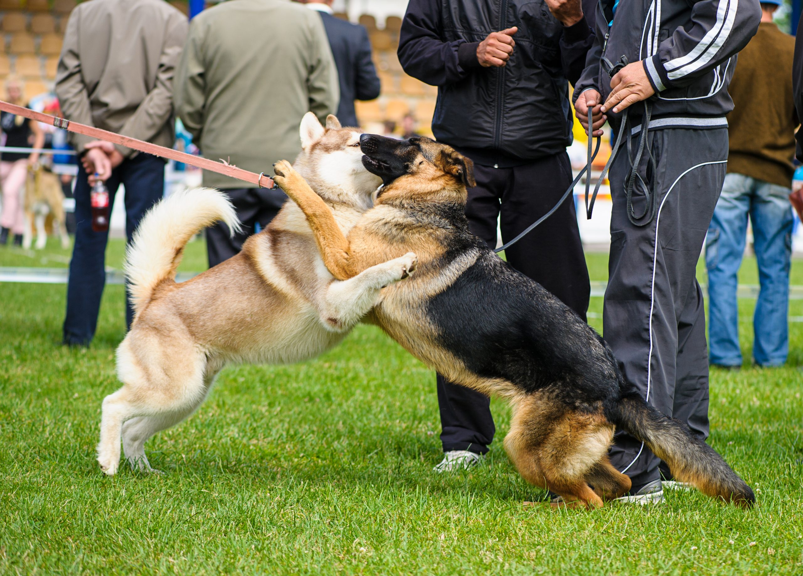 Say No To On-Leash Dog Greetings