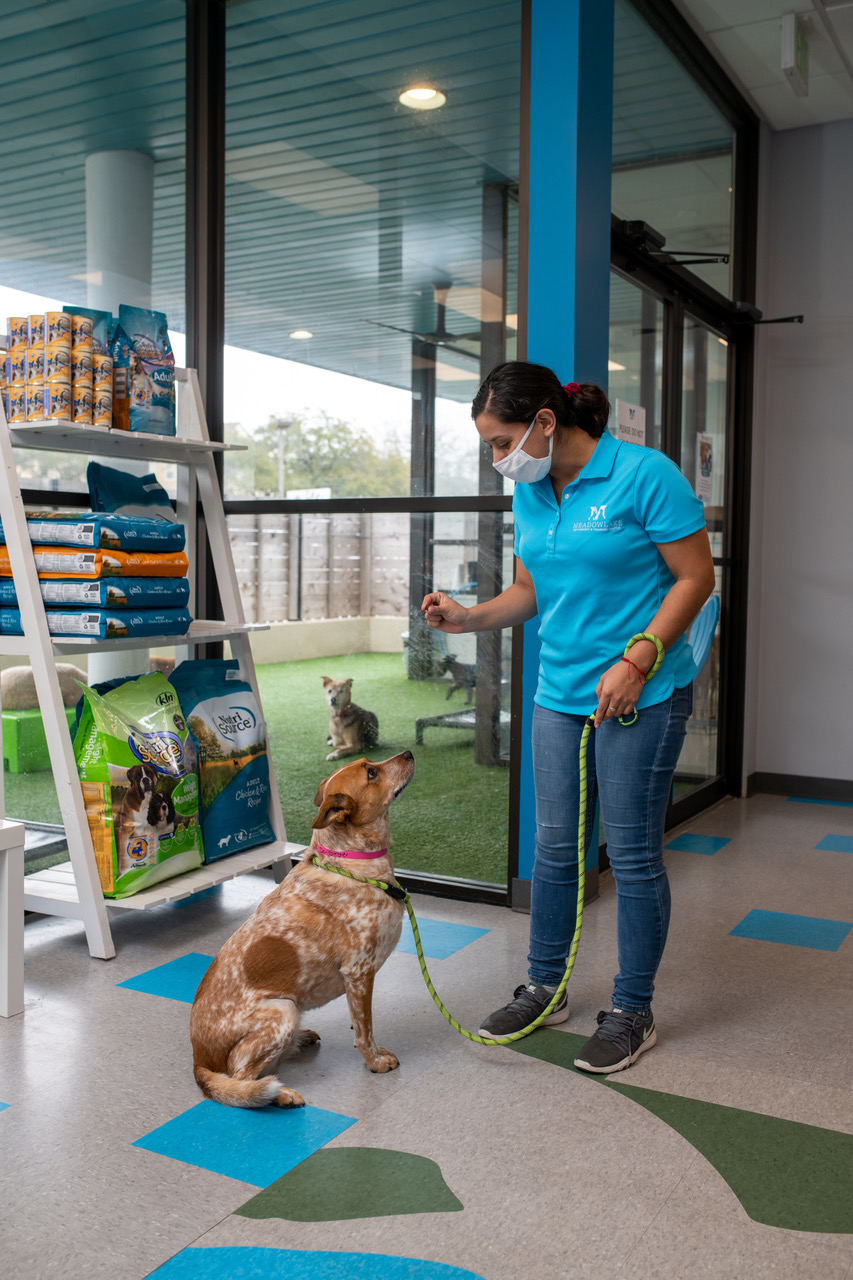 Q&A On Reward Based Training For Dogs