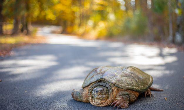GIVE TURTLES A BRAKE! By: cheryl conley