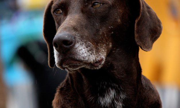 Senior Pet Health Tips