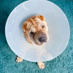 When Is It A Pet Emergency?