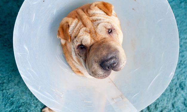 When Is It A Pet Emergency?