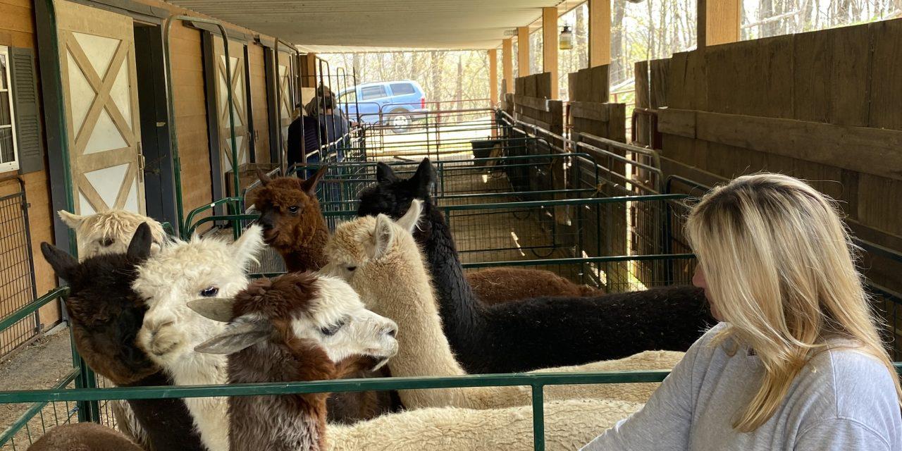 Llama & Alpaca Training Day 2