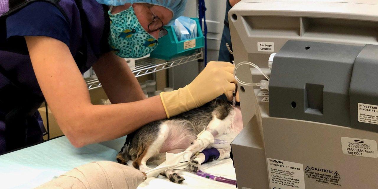 Trends in Pet Healthcare
