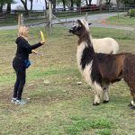 Llama & Alpaca Training Day 3