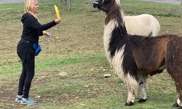 Llama & Alpaca Training Day 3