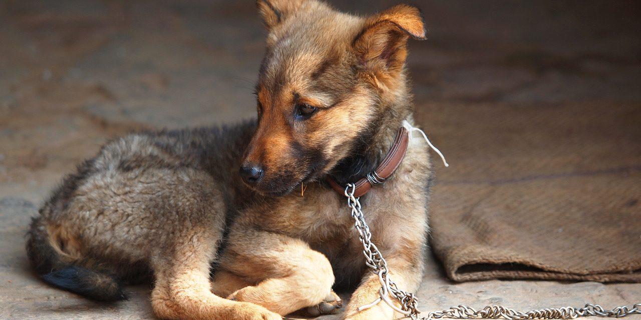 Stop Animal Cruelty In Houston