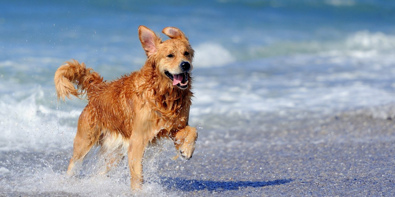 Ah…the dog days of summer are upon us!