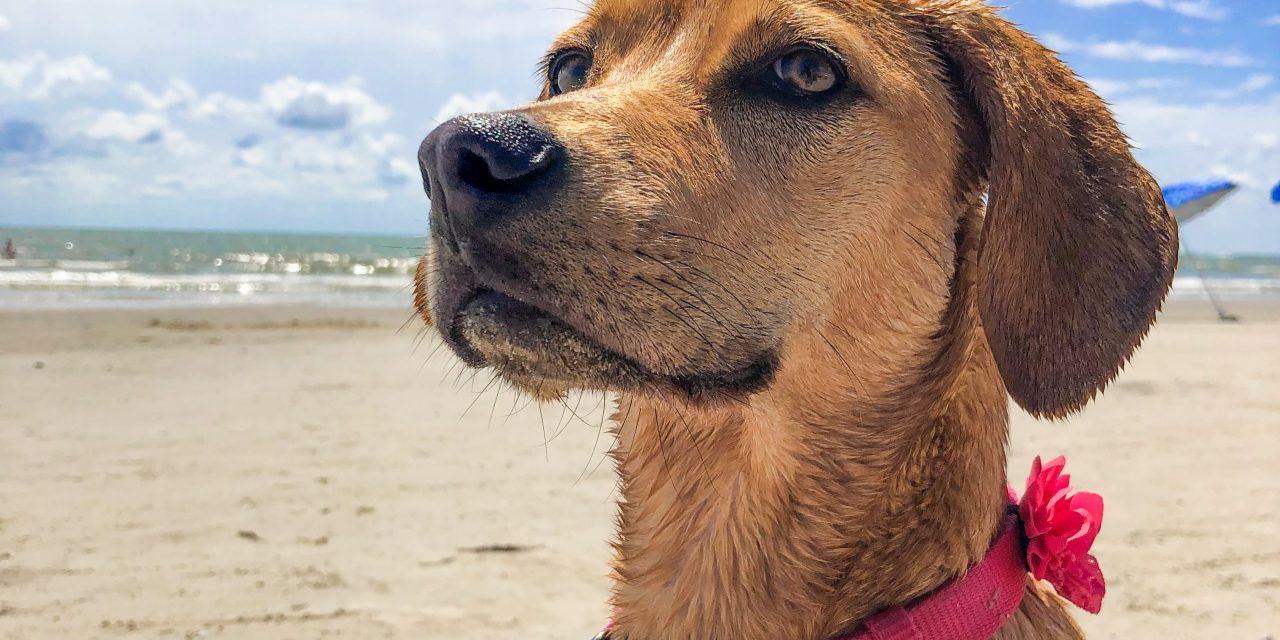 Annual beach bum contest