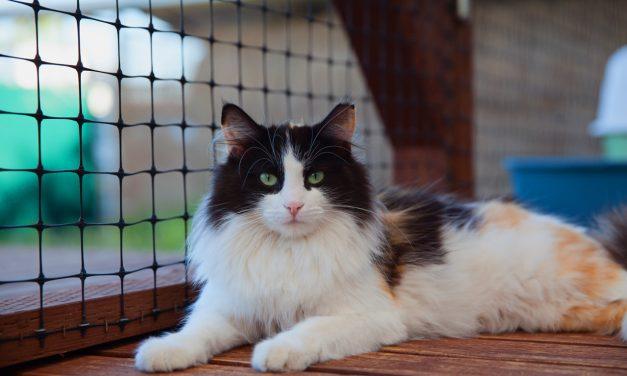 Community Cat Program For Houston