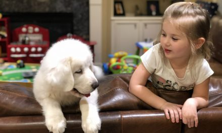 """The Great Pyrenees The Amazing Skills of the """"Gentle Giant"""""""