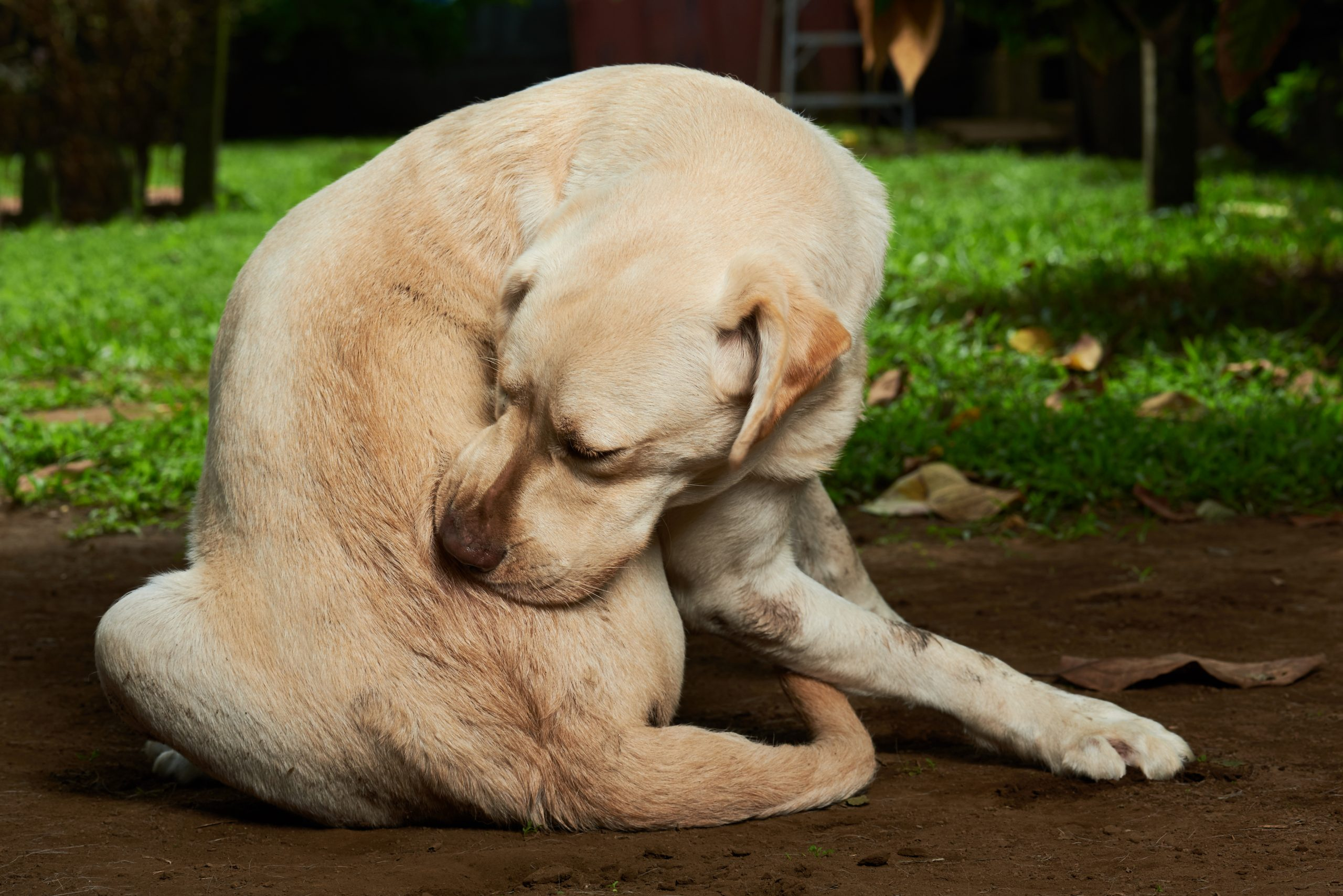 Parasites in Dogs & Cats